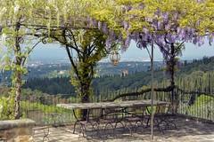 Terrazza con glicine (giorgiorodano46) Tags: aprile2017 april 2017 giorgiorodano nikon fiesole toscana tuscany glicine wisteria terrazza campagna countryside hills glycines terrace terrasse primavera spring printemps italy