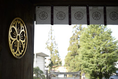 20140419 Takayama 3 (BONGURI) Tags: cherry nikon df shrine blossom  cherryblossom sakura  takayama  gifu        afsnikkor50mmf18g sakurayamahachimangushrine