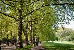 Stroll - Green Park, London (ebenette) Tags: leica m8 summilux35mmasph londonsketch ebenette