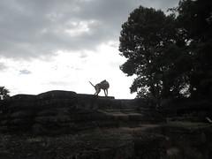 Cambodia - Angkor Wat dog on Wat Srah Srang