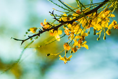 118.365 (Sabrina Rohwer Photography) Tags: flowers macro tree nature yellow project photography 50mm colorful day natural blossom bloom 365