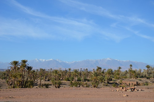 In the oasis, Draa Valley, Morocco