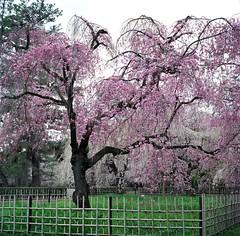 94700003 (Darjeeling_Days) Tags: hasselblad 京都 中判 プロビア