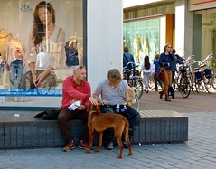 Nothing for the dog . (Franc Le Blanc .) Tags: people dog animal bench lumix sitting candid bank panasonic sit streetphoto seated mannen