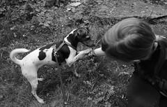 (moucreation) Tags: cats pets love dogs mona whatever myfriend mou brav moucreation myfriendbella