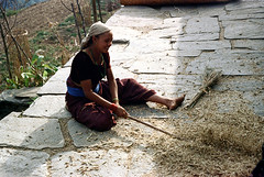 21-363 (ndpa / s. lundeen, archivist) Tags: nepal people woman mountain color film rural scarf 35mm village 21 nick grain barefoot stick nepalese 1970s 1972 youngwoman himalayas villager nepali threshing dewolf headcovering mountainvillage ruralvillage thresh nickdewolf photographbynickdewolf ruralnepal reel21 hillyregion beatinggrain