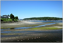 Low Tide (CanMan90) Tags: canada boats geese harbour britishcolumbia nanaimo lowtide cans2s rebelt3i