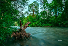Jungle River (Andreas Krappweis - thanks for 2,2 million views!) Tags: nature river natural nobody jungle sigma1020mm mangfall fujis5pro