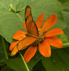 De zelfde kleur als de bloem (marja N.) Tags: utrecht nederland uithof botanischetuin