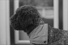 Tweetupvimle 2014 (Sina Farhat - Webcoast) Tags: light film barn analog canon raw bokeh folk hund sv sommar tmaxdev solnedgng ljus ipad gldje 50d sllskap skrpedjup gster polypanf50 vimle minigrisar tweetupvimle dslrscanned photoshopcc