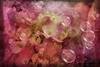 "Enfold me (Diana Thorold.) Tags: art texture psp interesting ie hypothetical 2014 manipulate flamingpear artdigital trolled pixlr awardtree dianathorold magicunicornverybest ""exoticimage"" netartii"