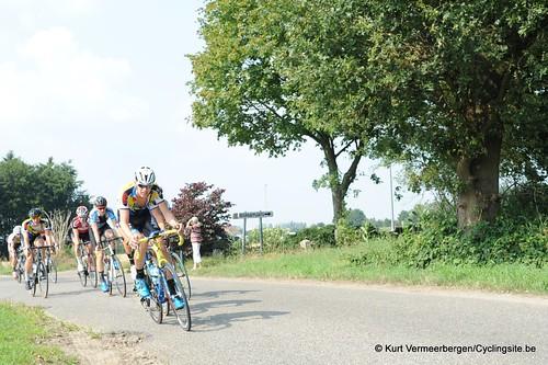 Geel Oosterlo  (104)