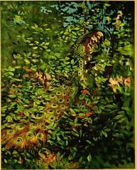 Anglų lietuvių žodynas. Žodis wood-creeper reiškia mediena-vijoklis lietuviškai.