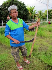 Rice cutter (Lode Engelen - ) Tags: thailand rice chiangmai farmer ricefields hangdong cuttingrice ricetool