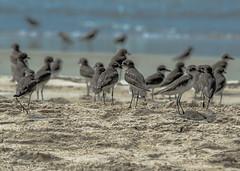Crowded Beach, Goa, India (Peraion) Tags: ocean sea india beach birds sand goa crowded