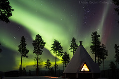 Sami Hut...Extreme Husky Sledding...FinlandExplored...Thank you very much. (Celebrating over 2 million views. Thank you) Tags: finland aurora extremehuskysledding ivalo febuary valentinesweek birthdayweek family happy joy sharing love huskies sledding snow green samihut lapland pinetrees night fell stars outoffocusalittleknockedthelenswhenmoving warm fire window chimney nature emotional overcome blessed gratitued exploring country culture exploredthankyou explore