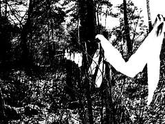 I carry your white flag (Arjan Grendelman) Tags: arjan grendelman arjangrendelman blackwhite monochrome digilux2 lyric lightroom6