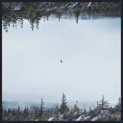 Pines (Zack Berwick) Tags: sureal surealism photography photo art digital photoshop edit edited conceptual dark gravity forest fog pine trees rocks canada