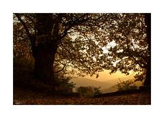 ... (ángel mateo) Tags: ángelmartínmateo ángelmateo bubión laalpujarra granada sierranevada andalucía españa atardecer sol cielo nubes ocaso rayosdesol contraluz árbol ramas andalusia spain sunset sun sky clouds sunbeams backlight tree branches castaño chestnut