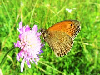 Butterfly 1205