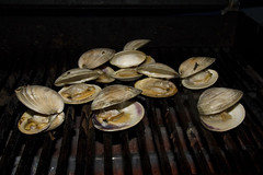 Quahogs Poppin' (brucetopher) Tags: quahog clam clams barbeque grill grilling food fresh seafood outdoor popping open shell shellfish shells hardshellclams cook bbq roast roasting