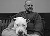 ~ dog day afternoon ~ (Mackeson) Tags: mackeson portrait pitbull dogdayafternoon