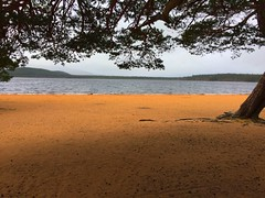 Beach (finlaymackenzie) Tags: lochmorlich calm noperson beautiful britain europe uk blue ocean lake loch sea seascape landscapes hot highlands tree yellow beach scotland