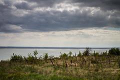 Timeless (z e d s p i c s™) Tags: balaton badacsony hungary hongarije magyarország ungarn plattensee vineyard landscape lakescape zedspics allrightsreserved 1704 storm cloudy clouds
