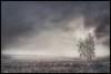 Farewell winter... (iEagle2) Tags: hullsjön trollhättan tree ep2 olympusep2 olympuspen winter spring