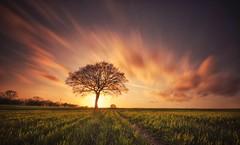 Sunset Blast (Captain Nikon) Tags: lonetree stantonbydale nomanslane derbyshire sunset cloudmovement moody leadinglines silhouette sundown verylongexposure nikond7000 sigma1020mmf4 srb10stopfilter bigstopper