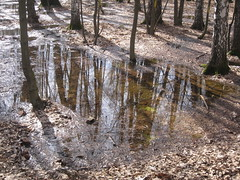reflection of trees (VERUSHKA4) Tags: canon park forest europe russia moscow city cityscape season spring april pool water reflection blue sky tree trunk nature vue ville view brown birch puddle