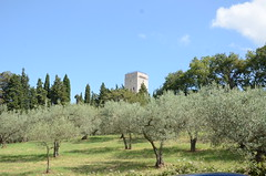 20160807-01 (Heinrock) Tags: assisi italy nikond7000 summer tower trees olives