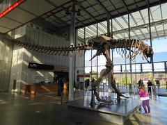 tyrannosaurus 08
