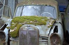 Auto (8) (Bettina.Gerstb.) Tags: scrapyard cars rust motorcycles vintagecars schrottplatz oldtimer rost motorrad autos