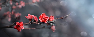 """""""And the day came when the risk to remain tight in a bud was more painful than the risk it took to blossom."""""""