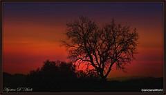 Bello e malinconico - Marzo-2017 (agostinodascoli) Tags: art digitalart digitalpainting tramonto texture sunset paesaggi landscape cianciana sicilia creative photoshop photopainting alberi nature agostinodascoli