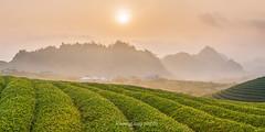 _J5K8758+78.0317.Tân Lập.Mộc Châu.Sơn La (hoanglongphoto) Tags: asia asian vietnam northvietnam northwestvietnam landscape scenery outdoor vietnamlandscape vietnamscenery vietnamscene mountain mountainouslandscape mountainouslandscapeinvietnam sky hill treehill canon canoneos1dsmarkiii tâybắc sơnla mộcchâu tânlập phongcảnh bầutrời đồicây phongcảnhtâybắc núi đồi đồimận hdr canonef2470mmf28lisiiusmlens countryside countrysideinvietnam nôngthônviệtnam làngquêviệtnam countrysidescenery countrysidesceneryinvietnam phongcảnhlàngquê morn morning sunrise buổisáng bìnhminh sun mặttrời teahill đồichè teatreehill bìnhminhmộcchâu 1x2 imagesize1x2