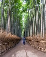 Bamboo Stroll (davidleeming) Tags: travel path green trees kyoto japan bamboo walk