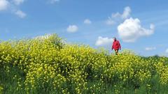 Walking in a wonderful world (daaynos) Tags: walking wonderful world sky clouds yellow blue red dike dijk man landscape landschap beautiful holland netherlands