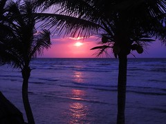 1229ex  worth waking early (jjjj56cp) Tags: sunrise pink purple dawn rosy beach waves mexico solidaridad quintanaroo early daybreak p900 jennypansing palms palmtrees silhouette silhouettes suntrail rising risingsun breakofdawn palm coconutpalm yucatanpeninsula mayanriviera rivieramaya
