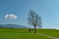 Green (monicamalfatti) Tags: green tree trekking trentino trees cloud love home valdinon fondo photography passion spring primavera sun squarci