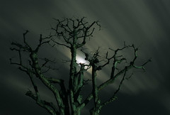and the land is dark (HiroAranoJPN) Tags: nikonf6 afsnikkor35mmf14g provia100f longexposure nd400 film sky