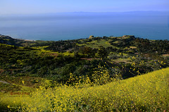 Sweeping View of Portuguese Bend Covered with Superbloom (Zeetz Jones) Tags: superbloom wildflowers nature ranchopalosverdes portuguesebendreserve superbloom2017 rollinghills southerncalifornia