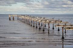IMG_0716.jpg (Matías Garrido Hollstein) Tags: punta arenas puntaarenas magallanes chile extreme south endoftheworld estrecho estrechodemagallanes southofchile