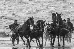 Paardenreddingsboot - 051_Web (berni.radke) Tags: ameland paardenreddingboot abrahamfock rettungsboot hollum strand meer watt holland nordsee beach pferd horse cheval caballo koń ross scialuppadisalvataggio canotdesauvetage rescueboat łódźratunkowa reddingsboot paard noordzee