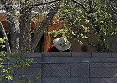 My Neighbour, Mr. Wilson-HFF! (✪☺✿4 Days To Go!✿☺✪) Tags: fencedfriday fence wall neighbour behind tree hat white