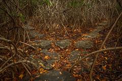 Tulum CESIAK org national park cenote mangroves-3