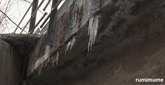 Hanging Around (rumimume) Tags: potd rumimume 2017 niagara ontario canada photo canon 80d sigmasunday winter morning detour outdoor metal bridge downtown