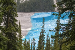contrasts (Joost10000) Tags: peyto peytolake lake alpine outdoor outdoors nature scenic landscape landschaft mountains forest blue banffnationalpark nationalpark canada canadianrockies rockymountains wild wilderness canon eos water tree trees pineforest