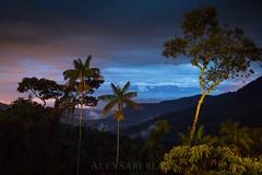 Itatiaia national park (alex saberi) Tags: jungle itatiaia riodejaneiro brasil brazil southamerica mataatlantica atlanticforest mountains serradamantiqueira night
